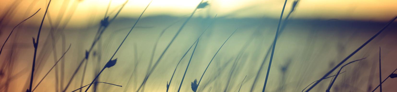 testimonials-rochester-mn